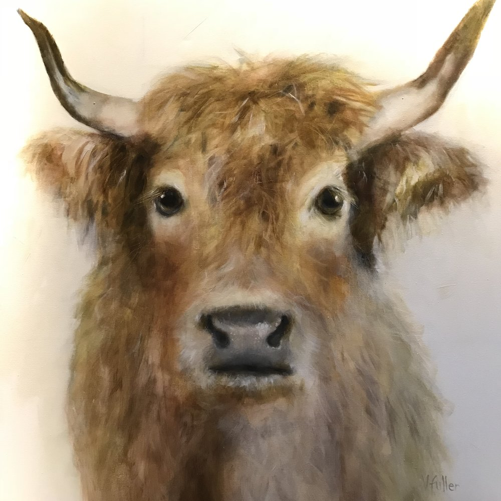 Highland Cow 36 x 36 Sold