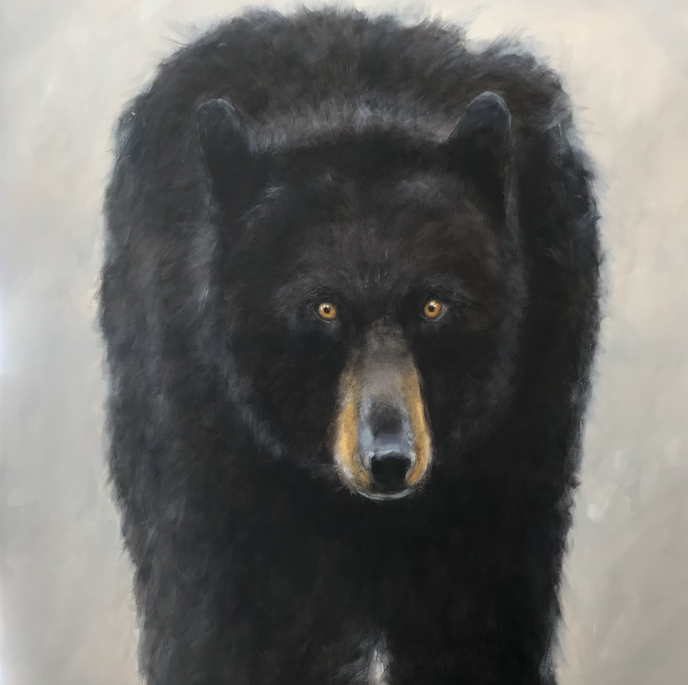 Black Bear - Ursa 48 x 48 Sold