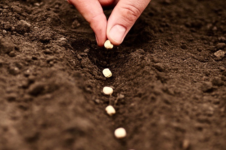 SERVICE Seeding (3x2)