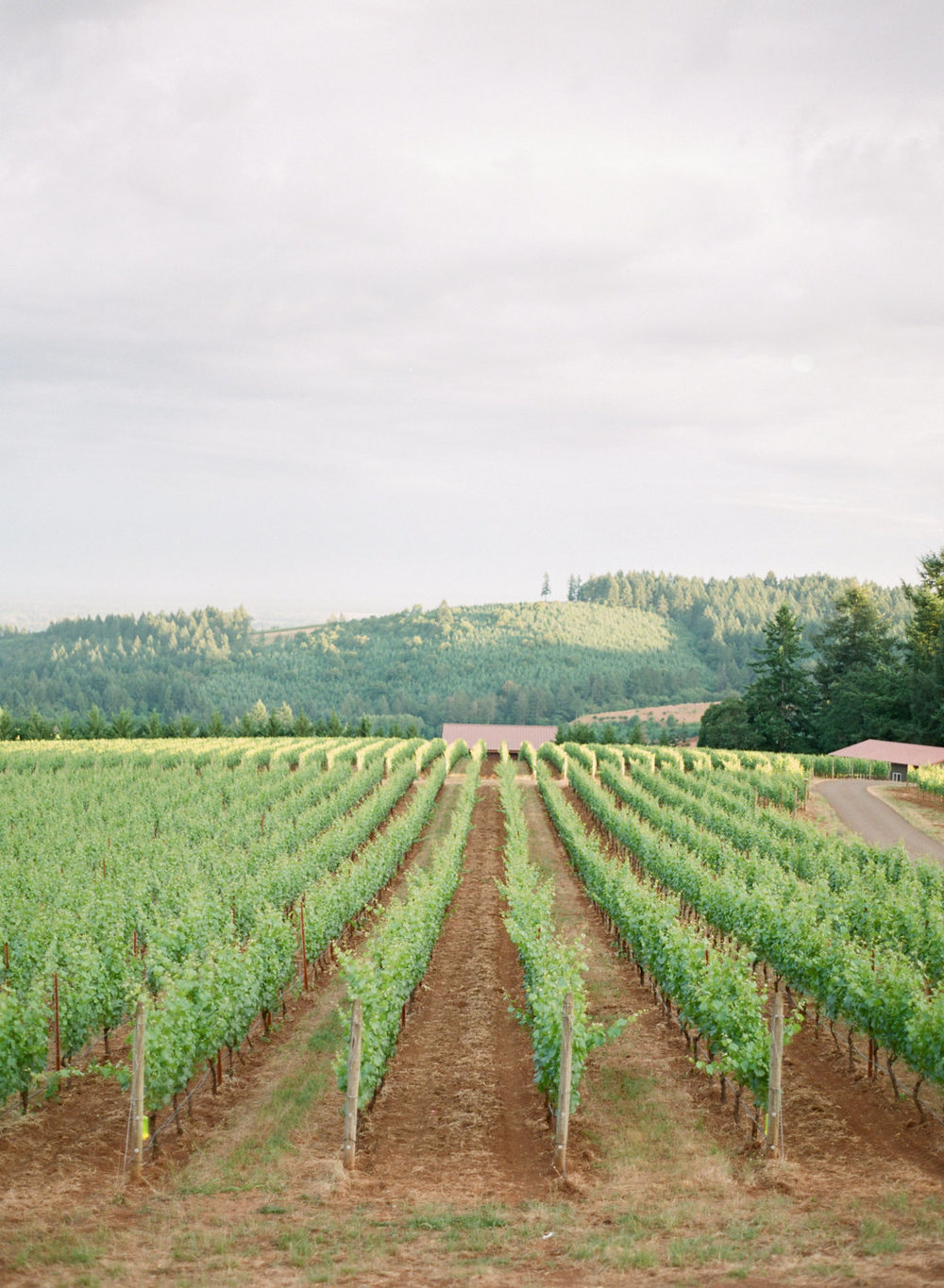 Carlos-Hernandez-Photography-Black-Walnut-Inn-Vineyard-Wedding-Inspiration-Dundee-Oregon-138.jpg
