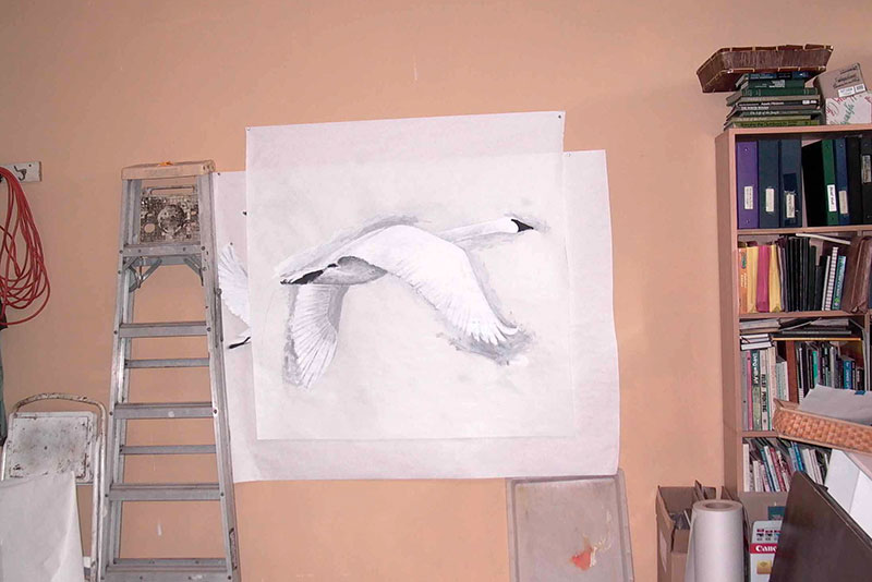 Finished swan paintings to be cut out