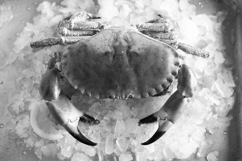 Crab_2 (2).jpg