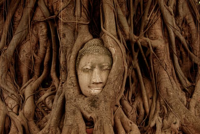 Buddha Head in Tree Roots.jpg