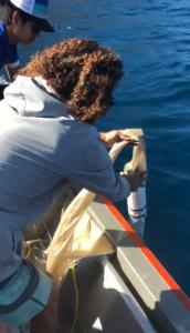 5gyre-trawl.png