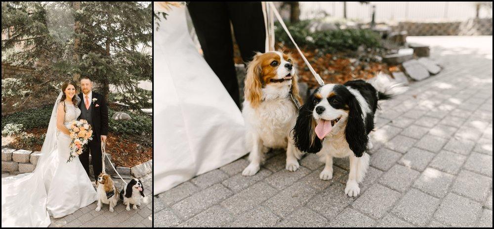 wedding puppies at the Van Dusen Mansion wedding