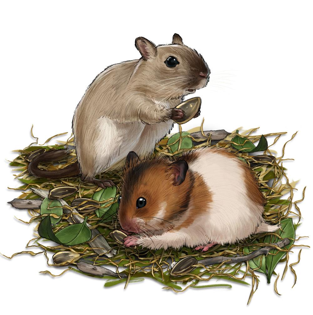 Carefesh Pet Food Packaging - Hamster/Gerbil
