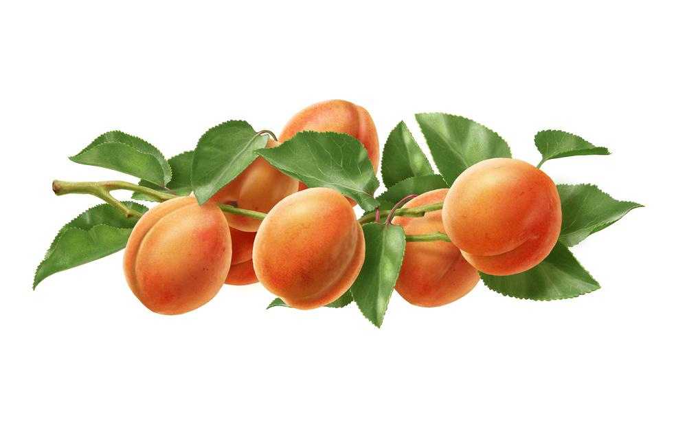 Apricot final.jpg