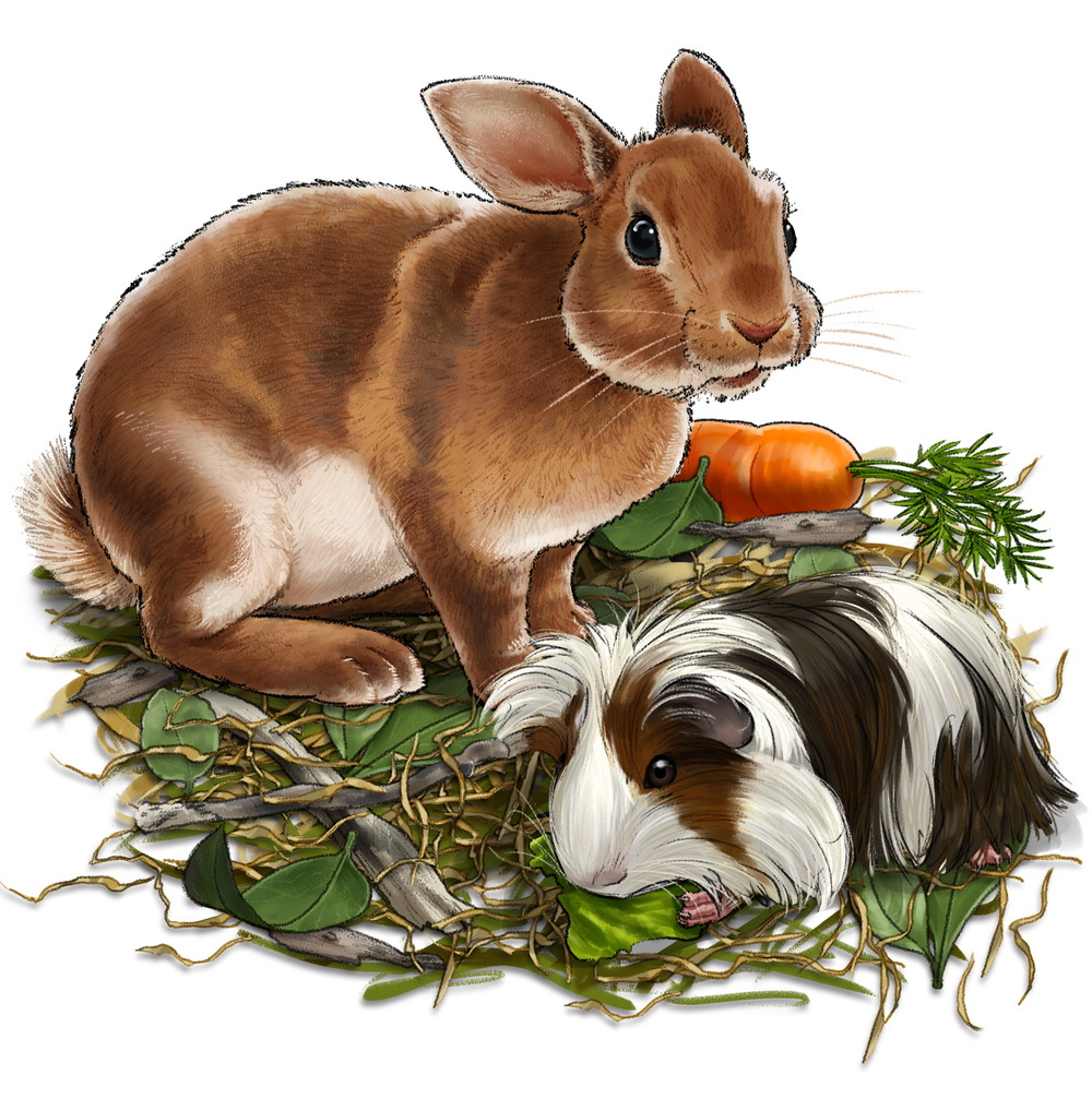 Carafes Pet Food Packaging - Rabbit and Guinea Pig
