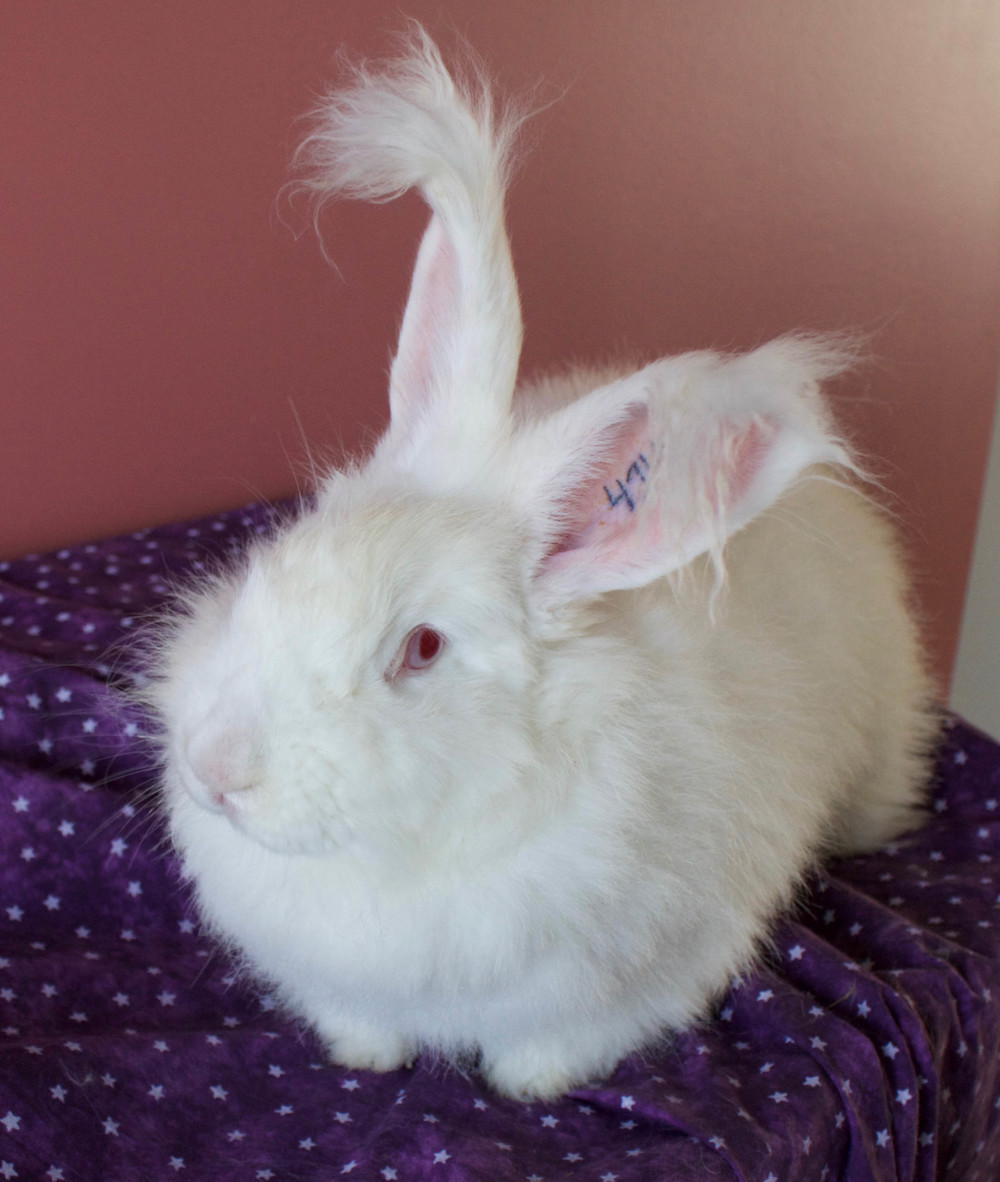 white bunny1.jpg