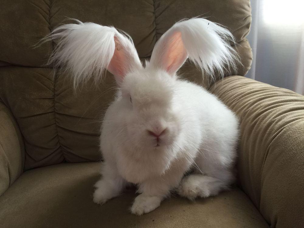fb rabbit2.jpg