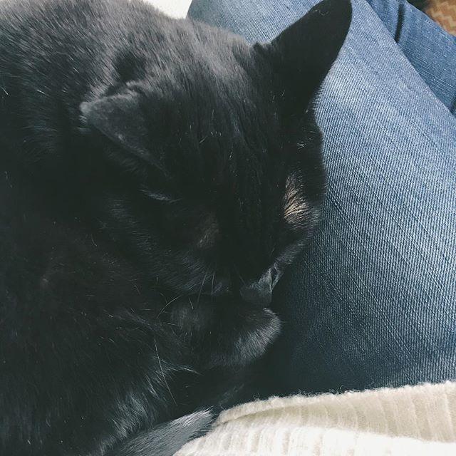 Sunday snoozes on this happy, happy day