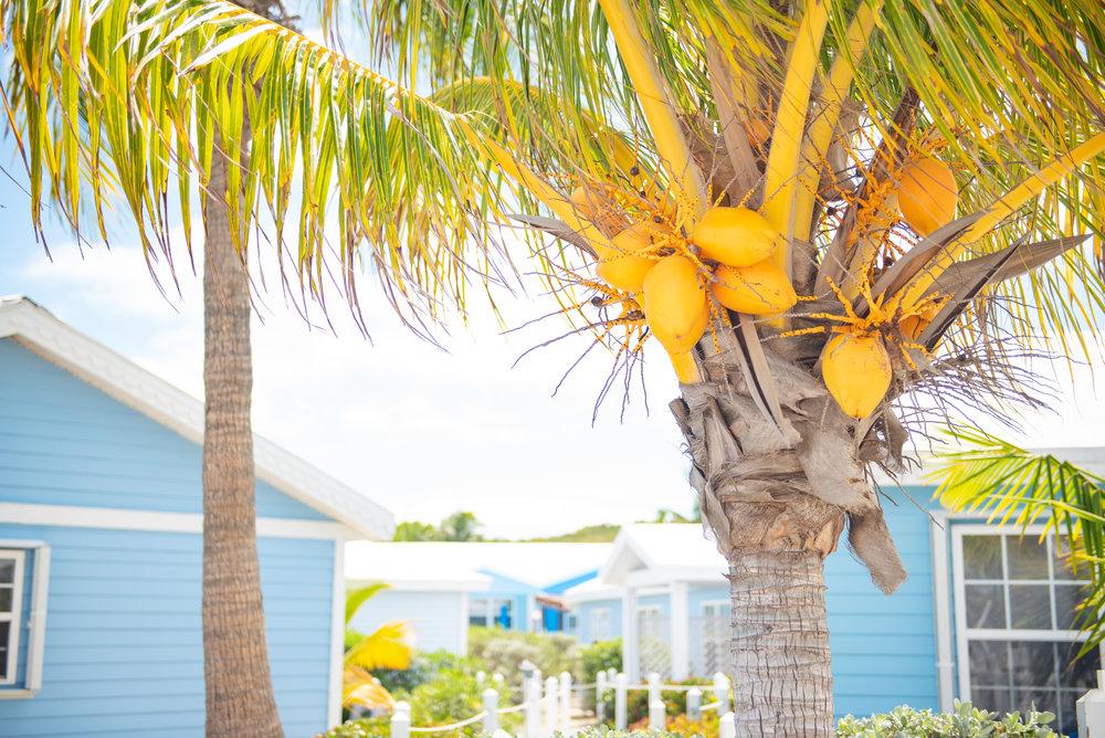 Exuma Bahamas 2019  (71 of 71).jpg