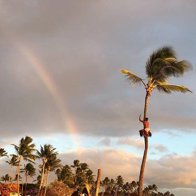 Hauʻoli Makahiki Hou from ʻAuliʻi Lūʻau! Here's the first of many rainbows of the New Year 🌈✨ Our coconut tree climber has the best view our oceanfront lūʻau🌴 • • • #2018 #auliiluau #kauai #luau #poipubeach #sheratonkauai #beachfront #rainbow #newyear #oceanfront #coconut