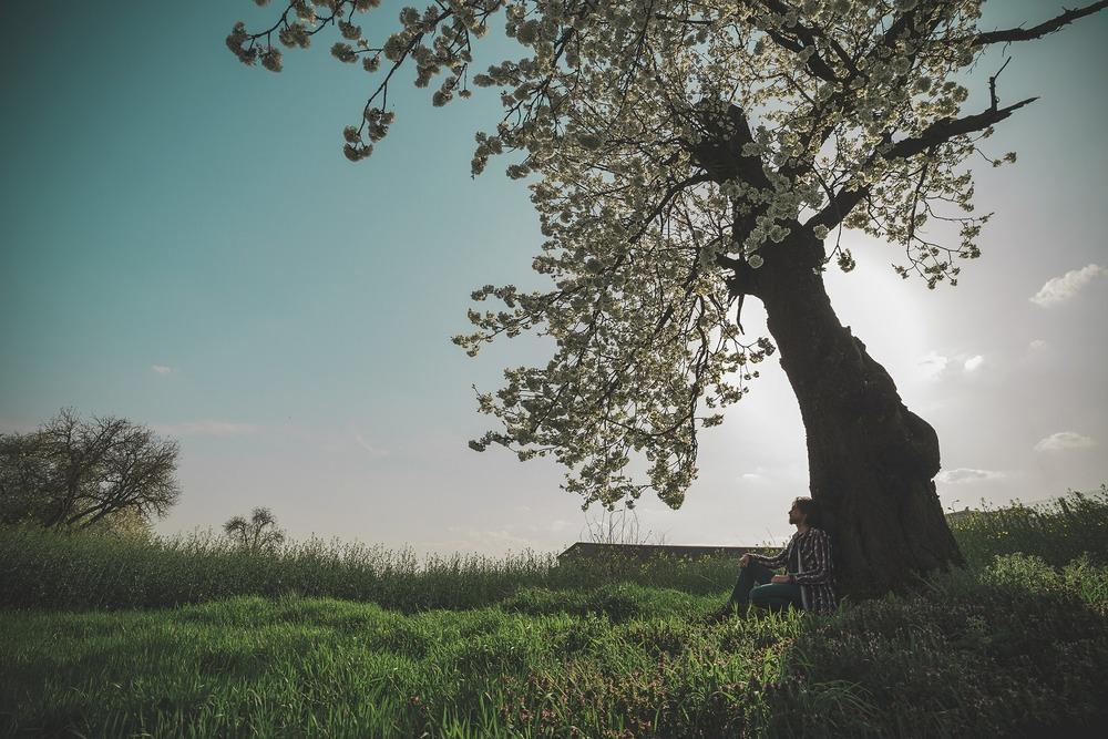 spring-604210_1920.jpg