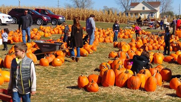 pumpkin-995416__340.jpg