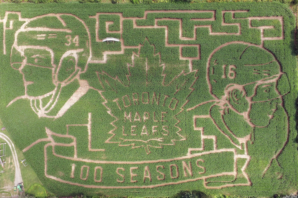 image courtesy of blogto.com. Actual maze in Florenceville-Bristol, New Brunswick.