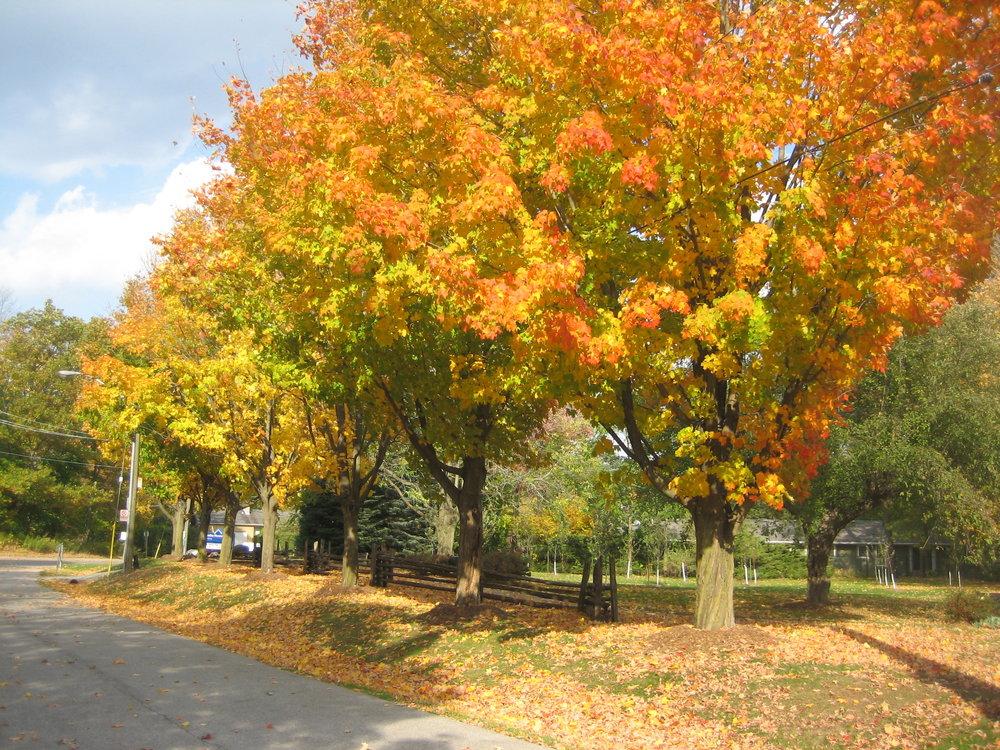 Fall Oct 2010 011.jpg