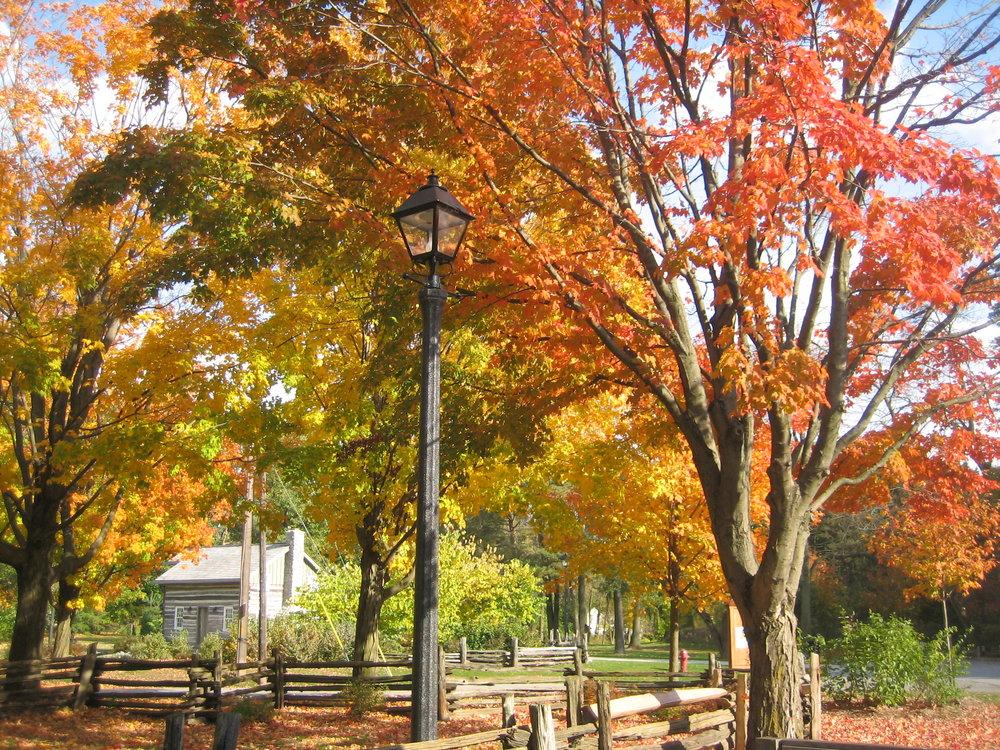 Fall Oct 2010 037.jpg
