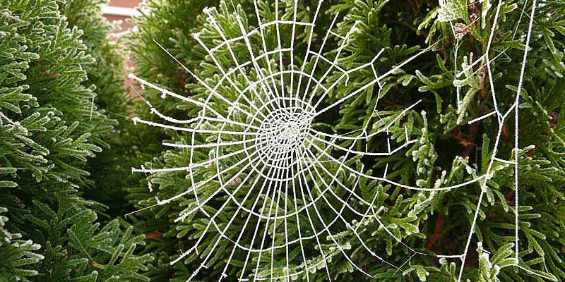 Modern Mississauga Ukraine Spider.jpg