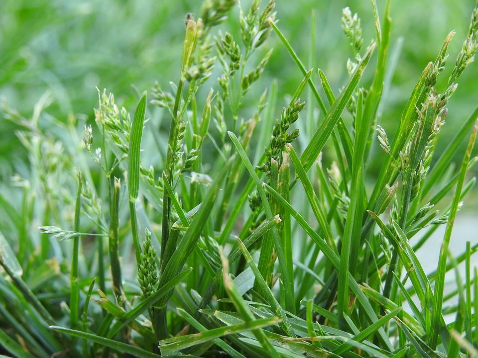 lawn-3386418_960_720.jpg
