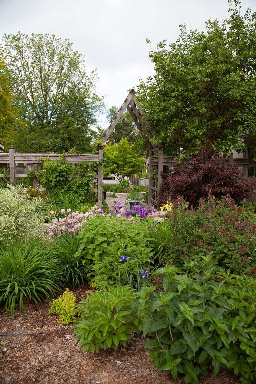 Front Yard perennials and lilac.jpg