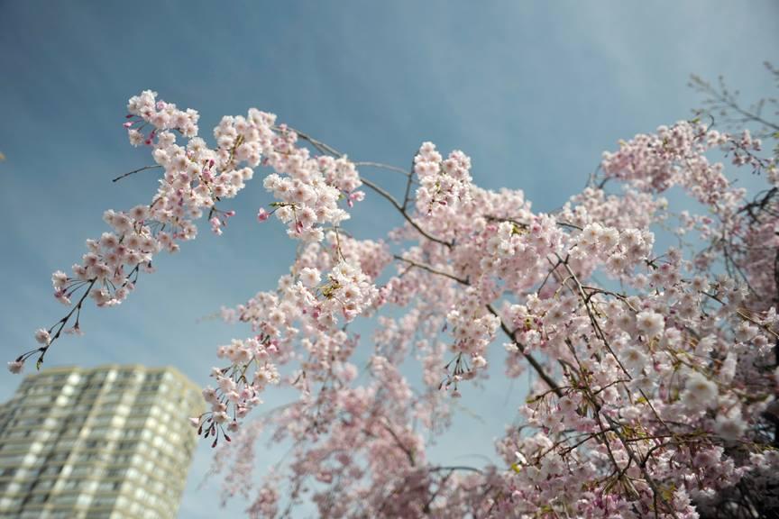 Kariya Park.jpg