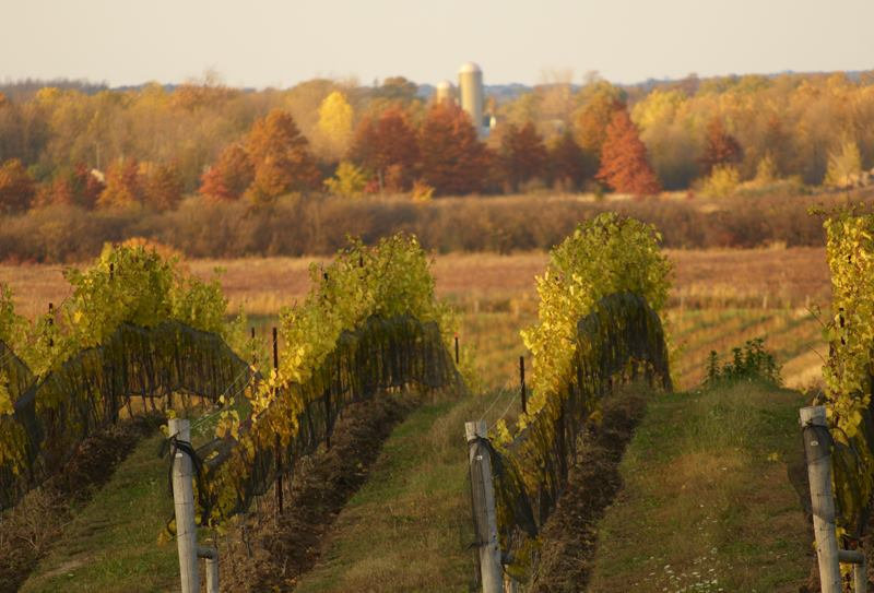 Wineries of Niagara On The Lake Modern Mississauga Media.jpg