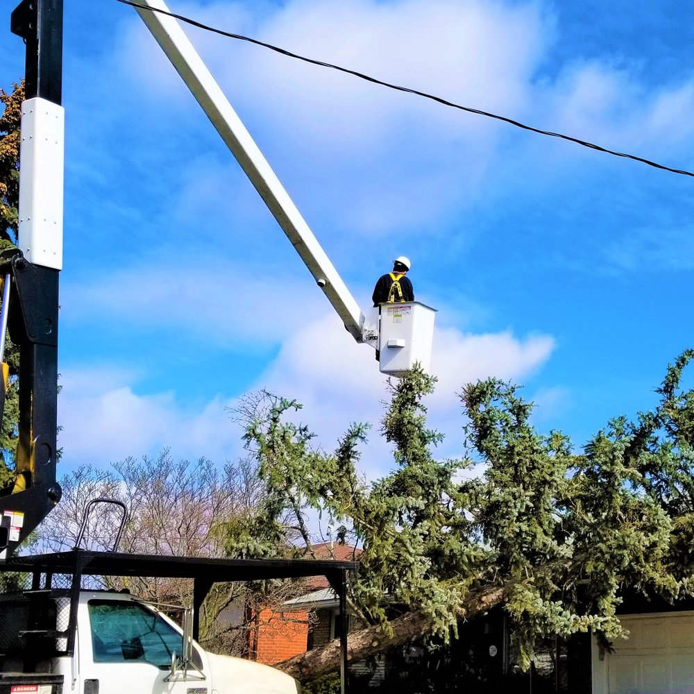 The-real-tree-masters-tree-removal.jpg