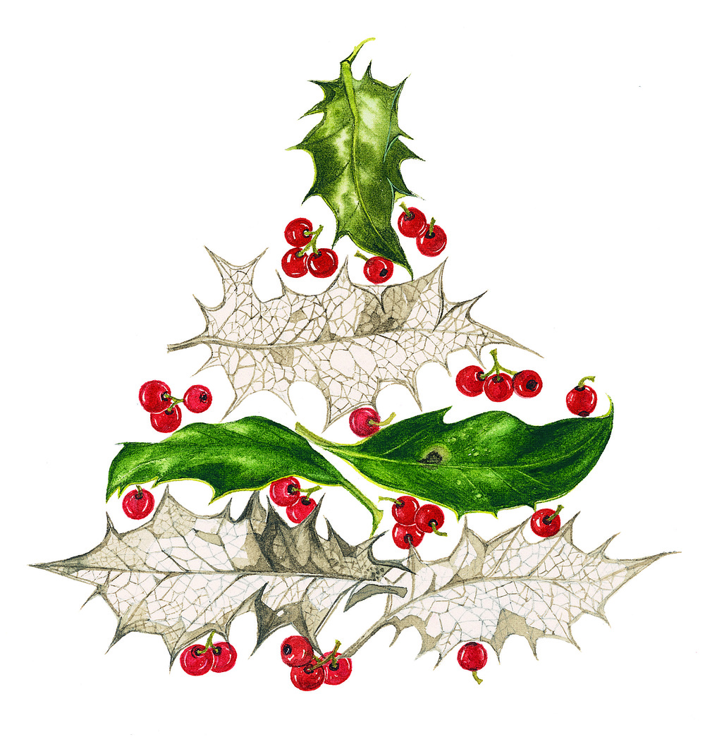 Holly Leaf Tree