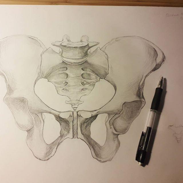Pelvis sketch - not the easiest of things to draw! #wip #pelvis #sketch #medicalart #bones #medicalillustration