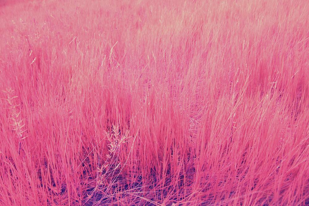 Grass edited.jpg