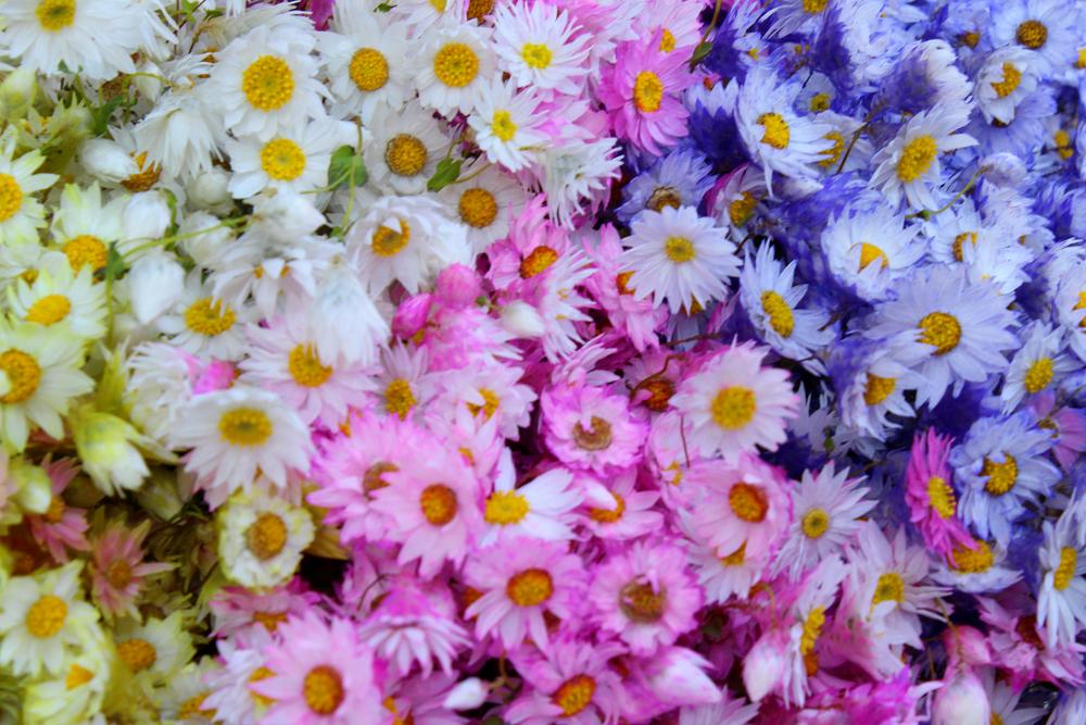 Flores edited.jpg