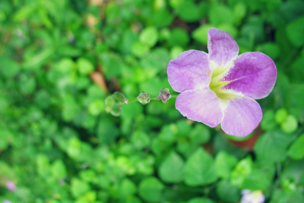 Flor edited.jpg