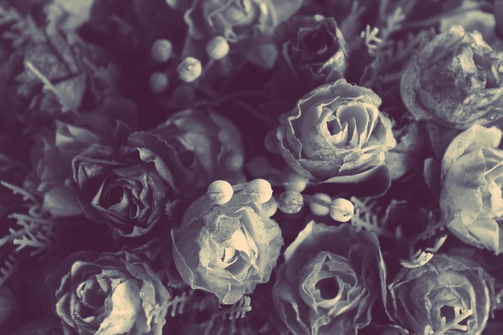 Flores secas edited.jpg