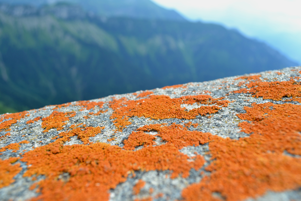 Naranja edited.jpg