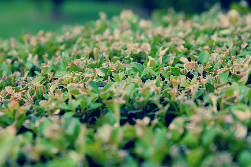 Grass 2 edited.jpg