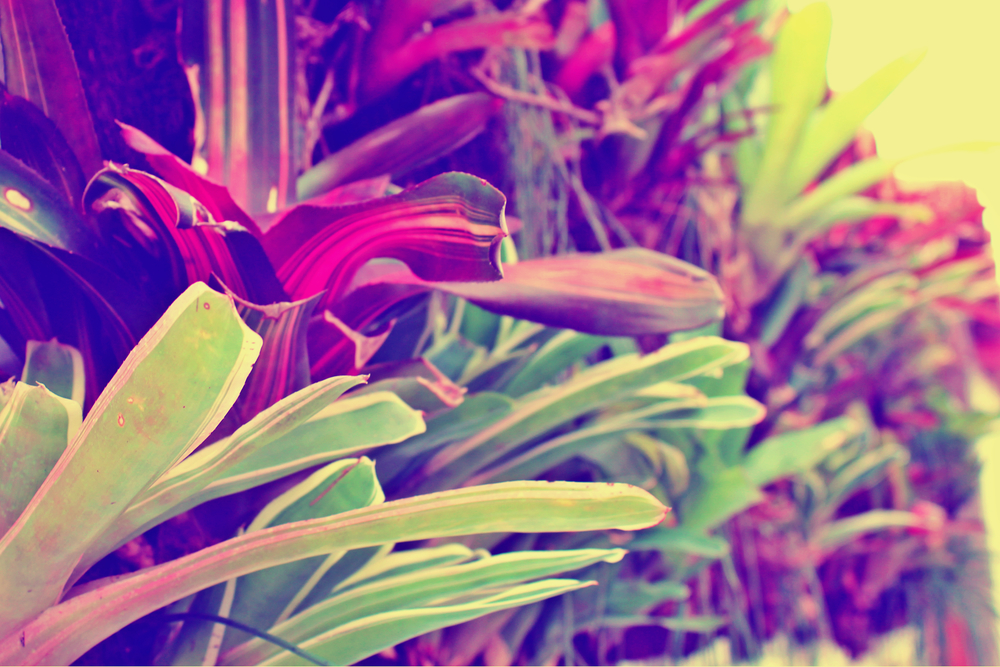 Matas edited.jpg