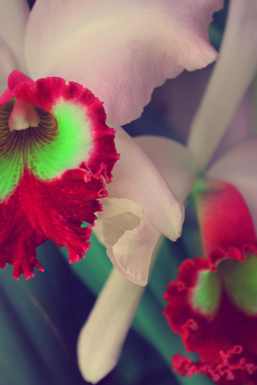 Orquidea edited.jpg