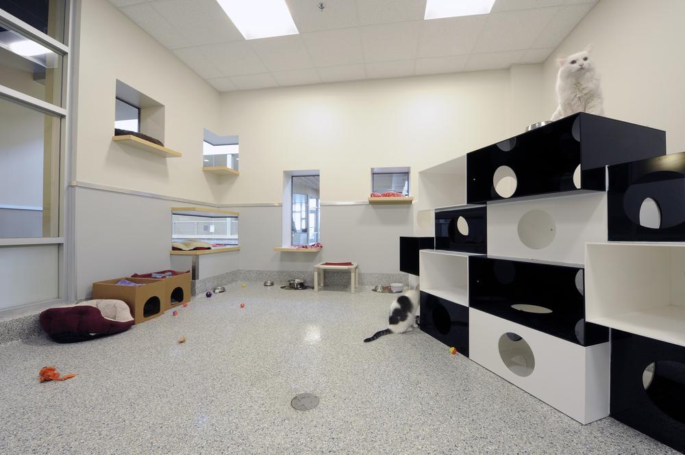 Ottawa Humane Society Interior 14.jpg