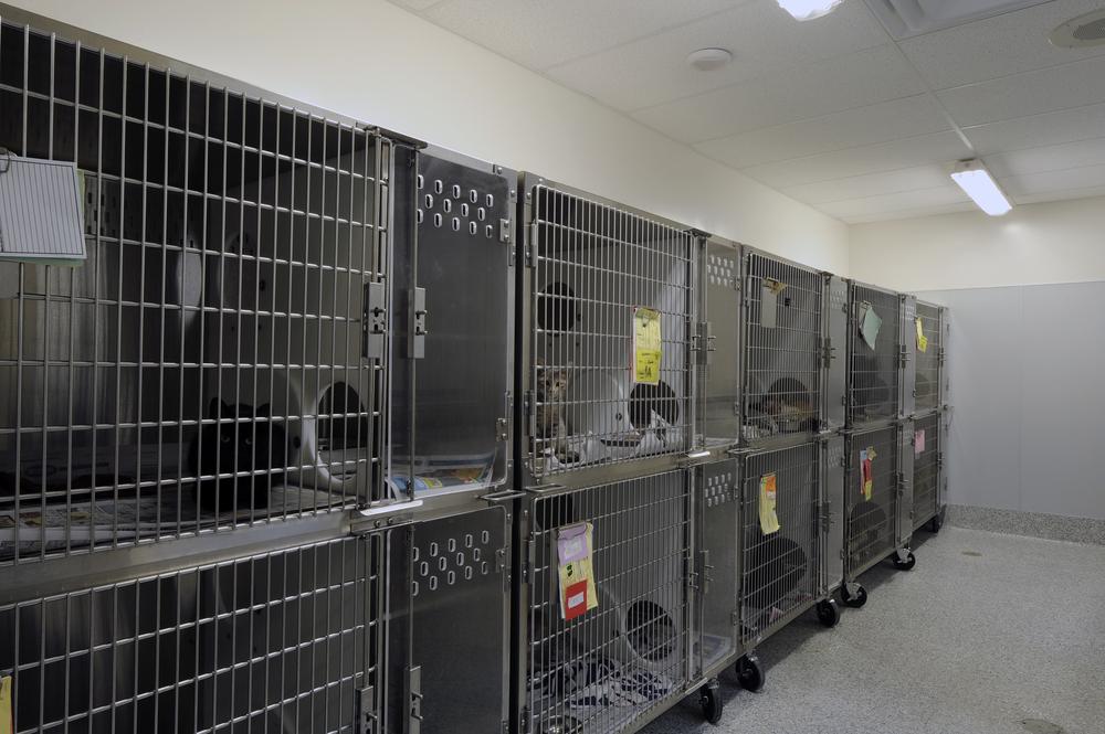 Ottawa Humane Society Interior 26.jpg