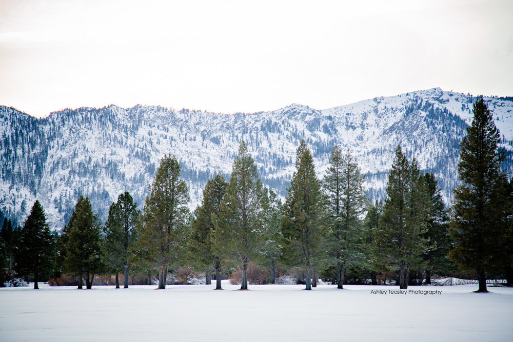 Britni & Dennis - Edgewood South Lake Tahoe - Lake Tahoe & Sacramento Wedding Photographer - Ashley Teasley Photography--37.JPG