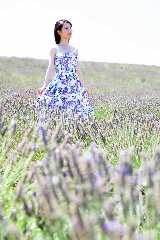 travel_the-purple-fields_01.jpg