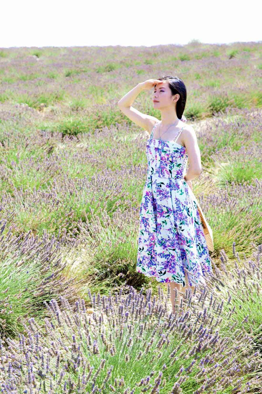 travel_the-purple-fields_07.jpg