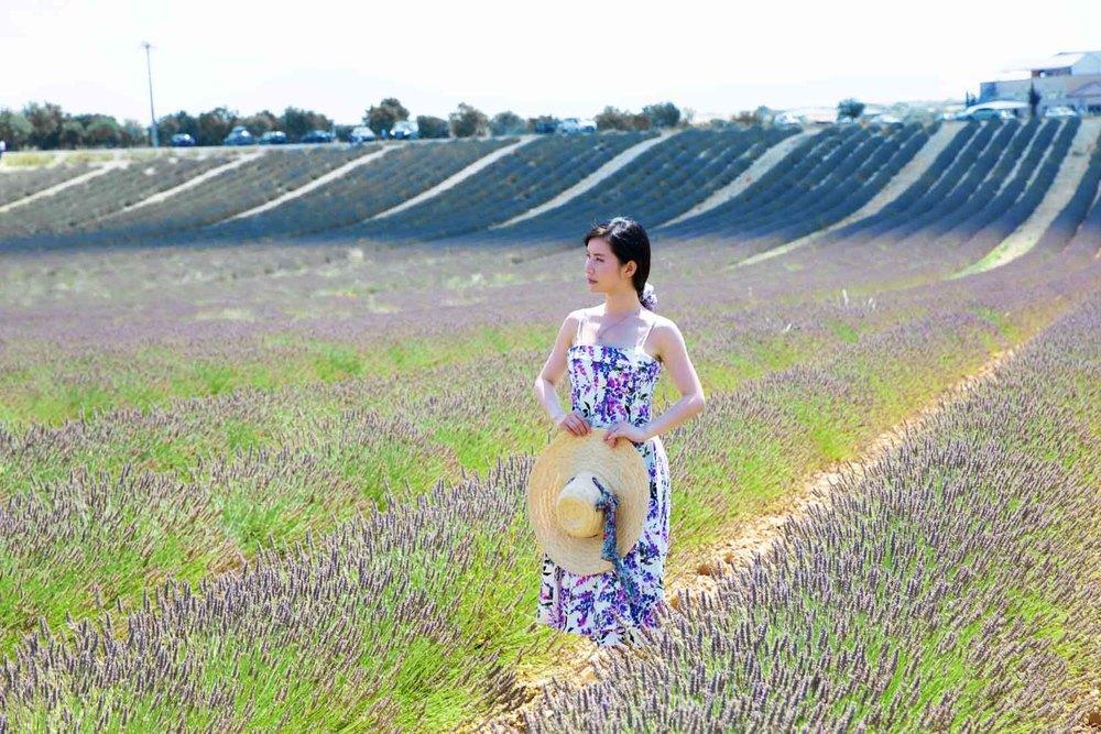 travel_the-purple-fields_12.jpg