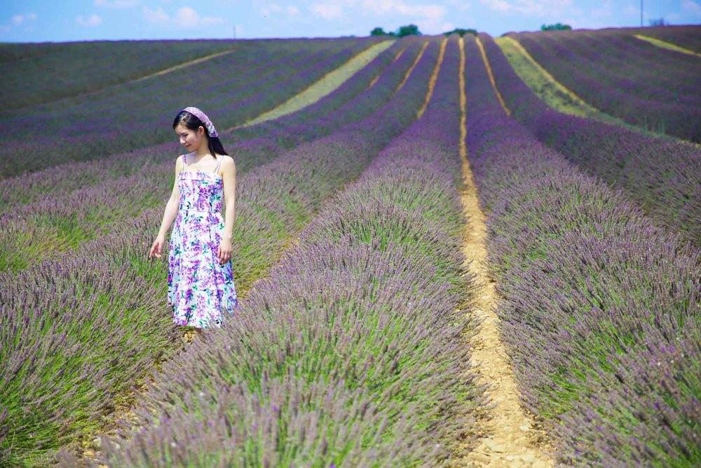 travel_the-purple-fields_15.jpg