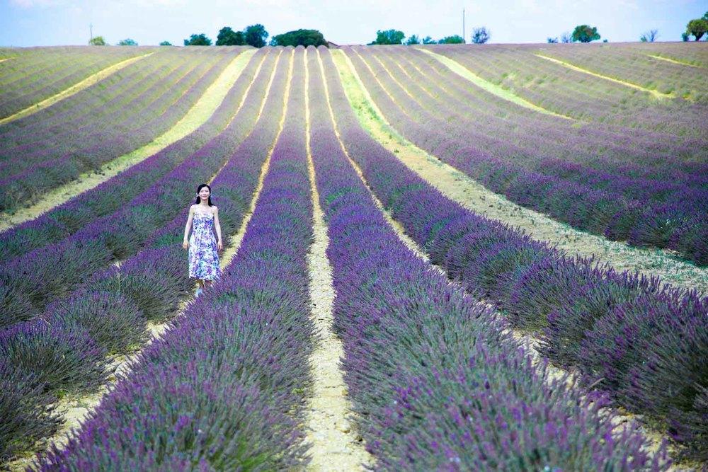 travel_the-purple-fields_16.jpg