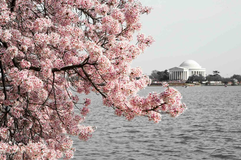 travel_cherry-blossom-and-youth_08.jpg