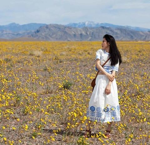 """#DeathValley is the hottest, #driest place on the entire North American continent. But once every 10 years or so, something magical happens: The valley explodes with a rare floral #superbloom, in which its native plants literally spring to life. @deathvalleynps started showing signs of a super bloom in early January after heavy rains pummeled the region in fall. Travelers are driving in from all around to catch what some experts call a #onceinalifetime event, a rare chance to see an arid valley covered in brilliantly-colored flowers. It's been 11 years since Death Valley was so #fulloflife "" I was one of the luckiest travelers. Here are our photos walking through a field of #Desert #Sunflowers during rare 'super bloom' of #wildflower in Death Valley NP March 24, 2016. [Linkinbio] see more pictures. @temperleylondon #superbloom2016 #desertflowers #temperleylondon #chole #travelphotography"