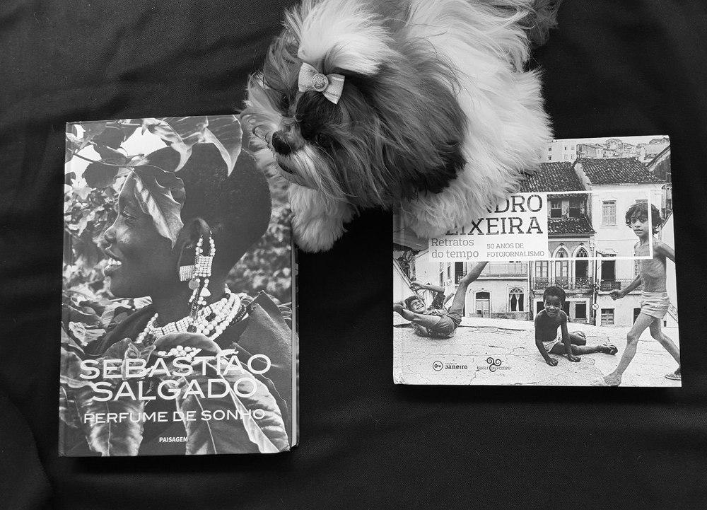 Novas aquisições, livros do Salgado e do Teixeira. Ah, e Leica, minha adorável cachorrinha.
