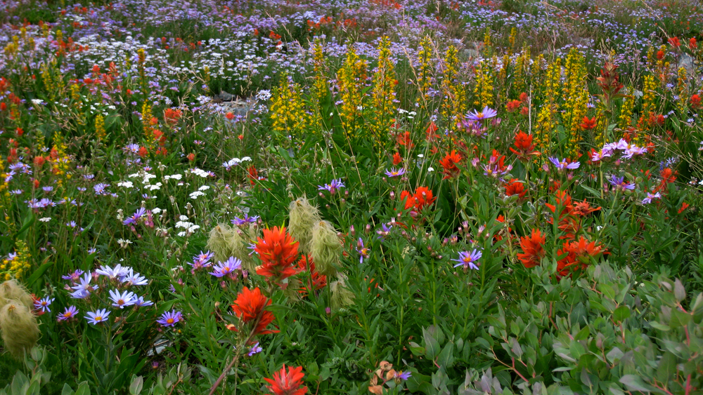 flower cornucopia on the Northern Loop Trail
